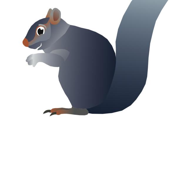 """Grey Squirrel Koolamooloo"" stock image"
