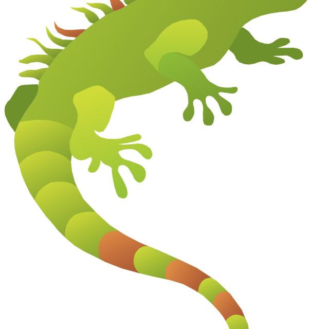 """""""Iguana Koolamooloo"""" stock image"""