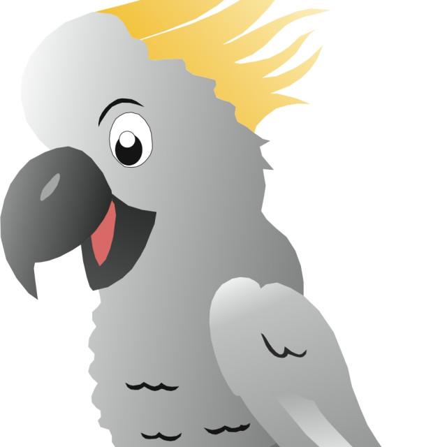 """""""Sulphur Crested Cockatoo Koolamooloo"""" stock image"""