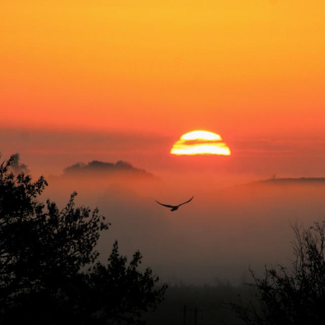"""""""Dawn"""" stock image"""