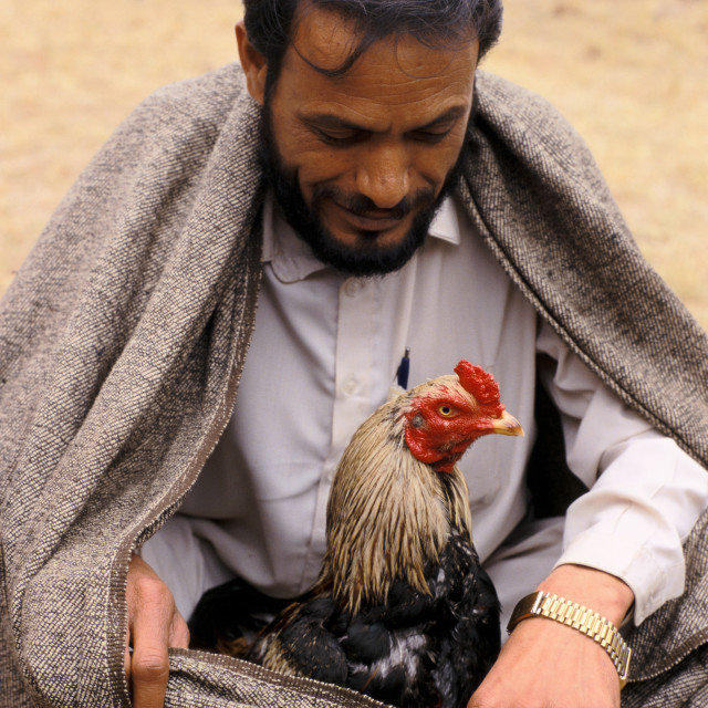 """""""Before the cock fighting ( Pakistan)"""" stock image"""