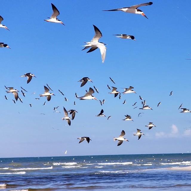 """""""Birds enjoying the freedom"""" stock image"""