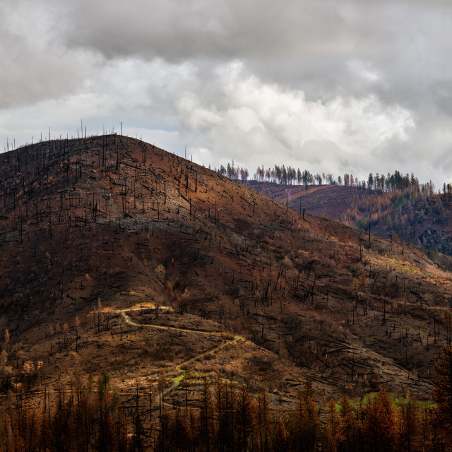 """Road on a Burned Hillside After A Forest Fire in Concow, California."" stock image"