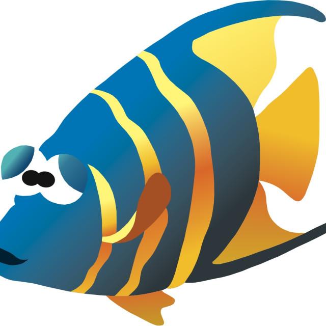 """Angel Fish Koolamooloo"" stock image"