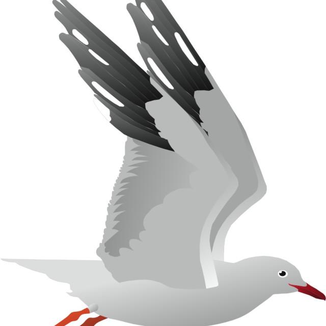 """Sea Gull Koolamooloo"" stock image"