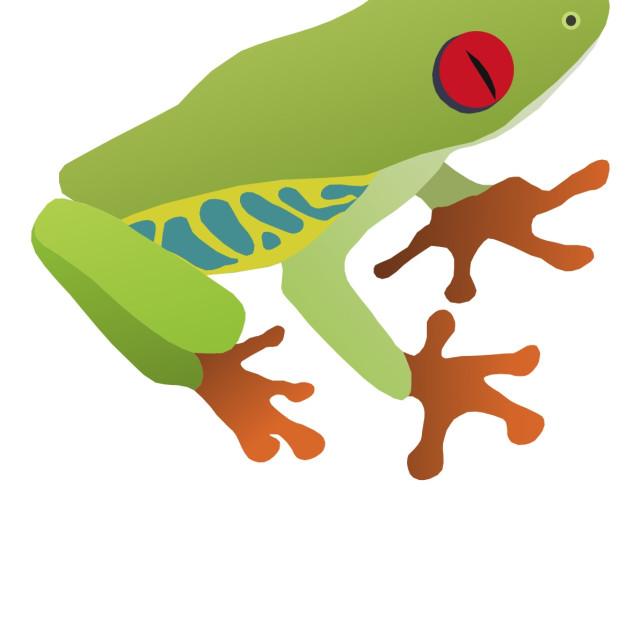 """""""Tree Frog Koolamooloo"""" stock image"""