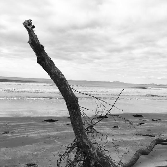 """Driftwood 2"" stock image"