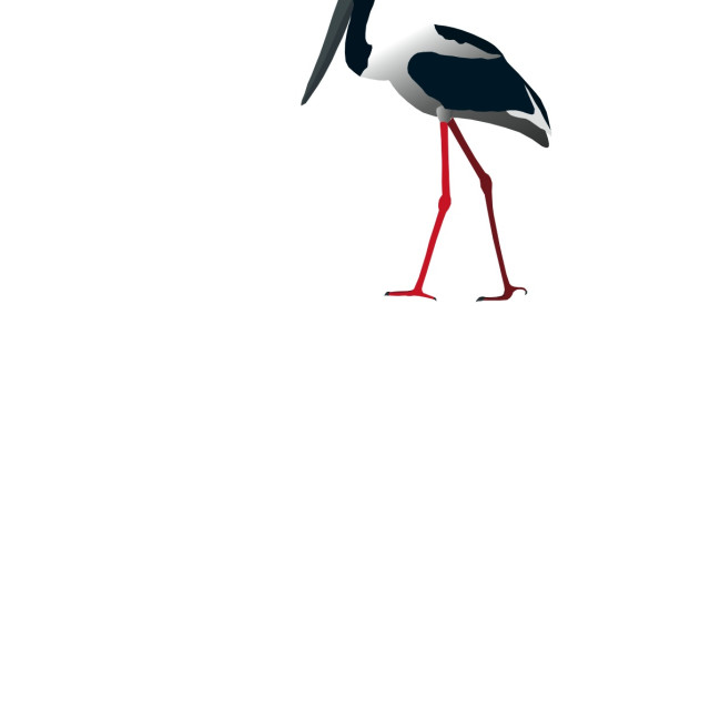 """Stork Koolamooloo"" stock image"