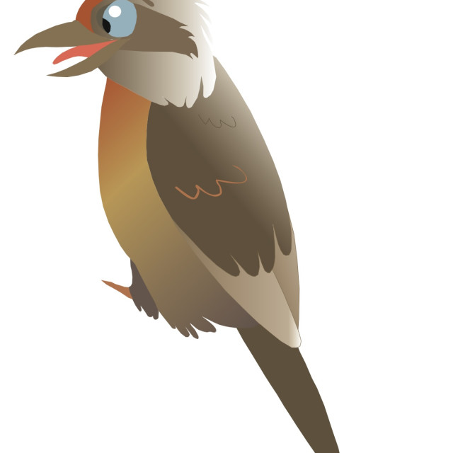 """Kookaburra Koolamooloo"" stock image"