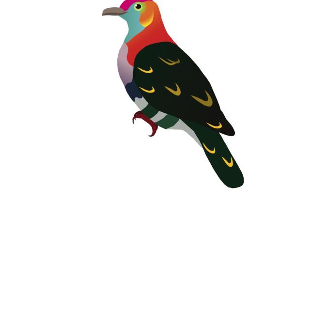"""Superb Fruit Dove Koolamooloo"" stock image"