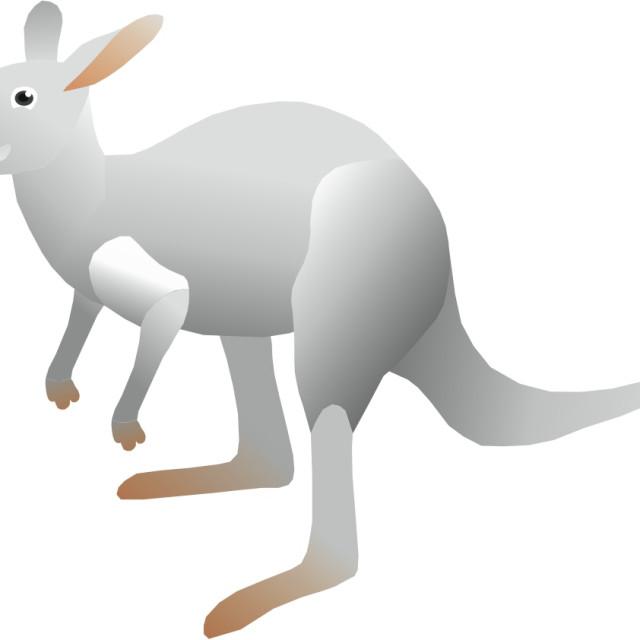 """White Kangaroo Koolamooloo"" stock image"
