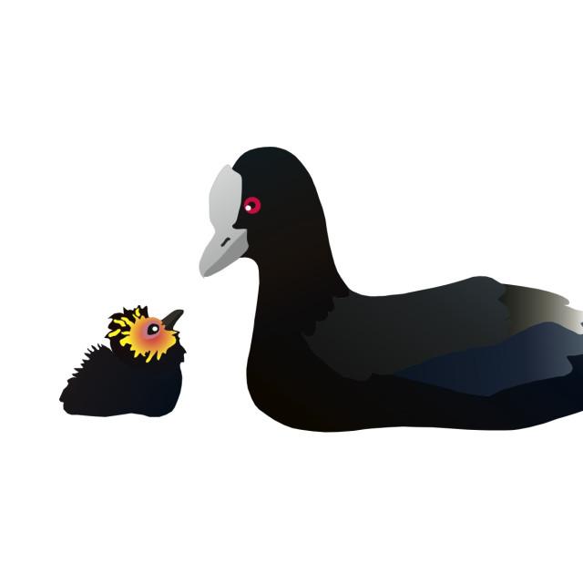 """""""Coot and Chick Koolamooloo"""" stock image"""