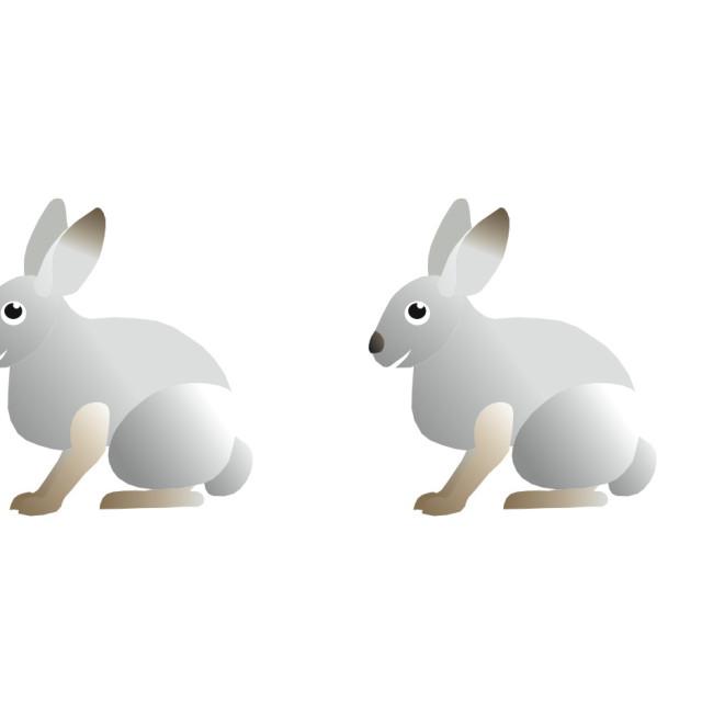 """Rabbits Koolamooloo"" stock image"