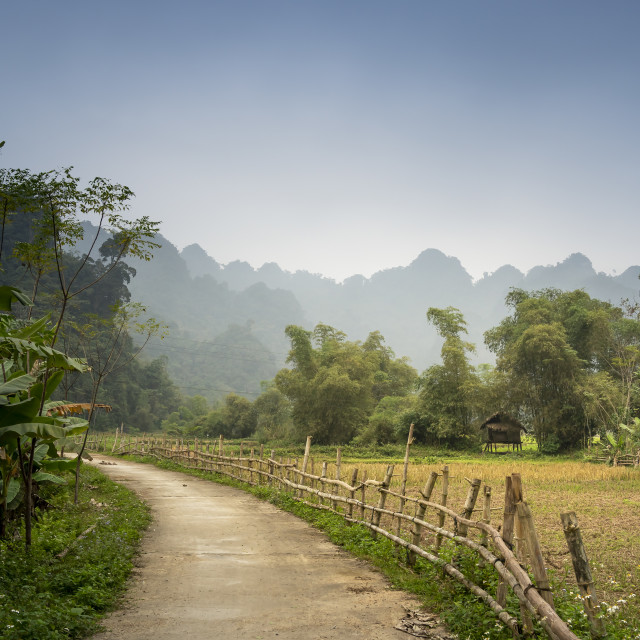 """peaceful landscape of rice fields and road to village"" stock image"