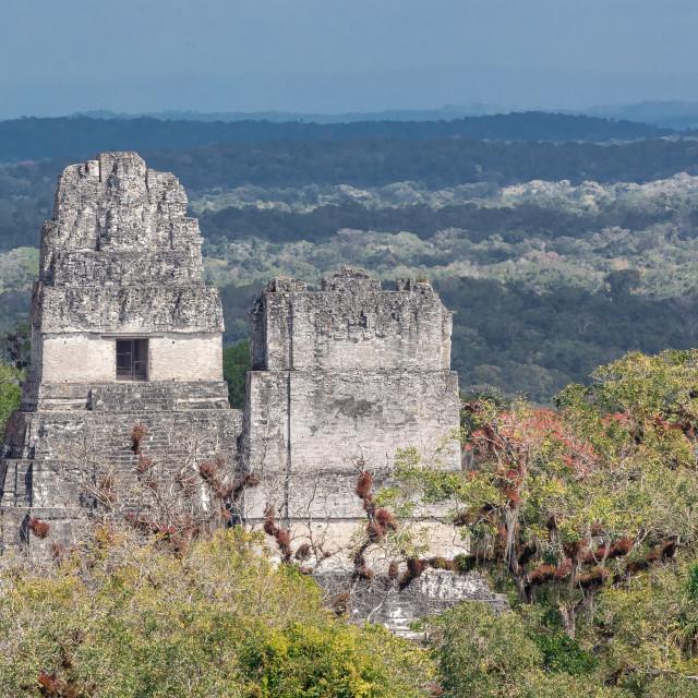 """Tikal ruins, Guatemala"" stock image"