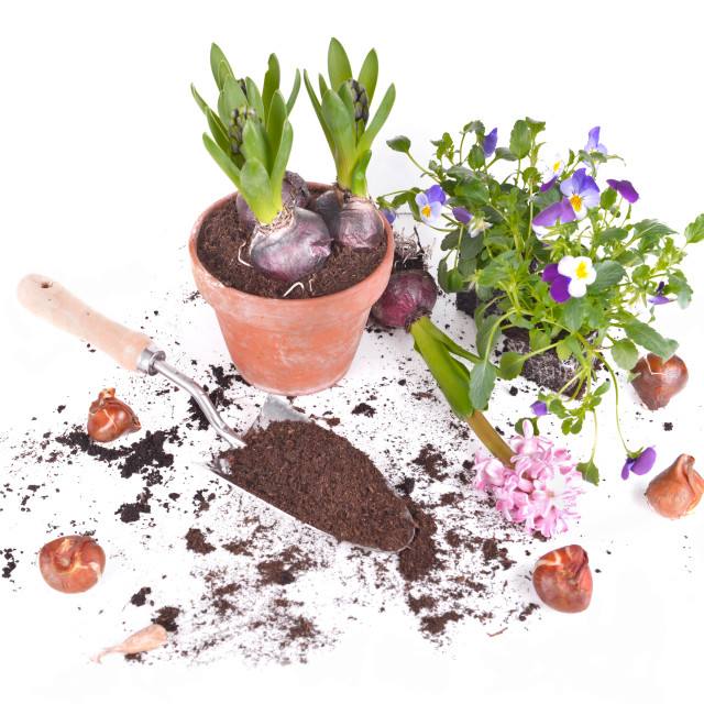 """""""spring flowers potted on white"""" stock image"""