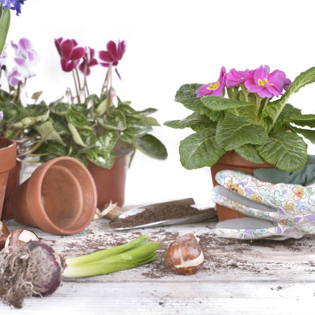 """""""gardener holding flowerpot"""" stock image"""