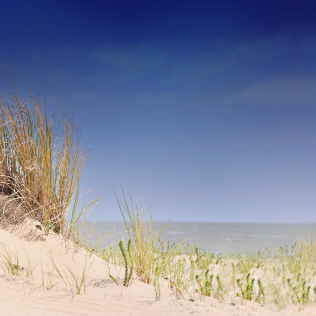 """""""beautiful panoramic view on the seaside from dunes"""" stock image"""