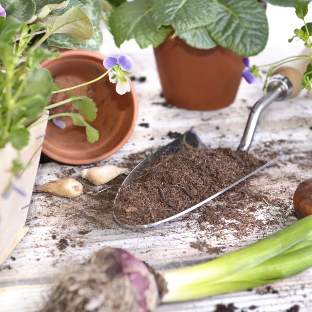 """shovel filled with soil"" stock image"
