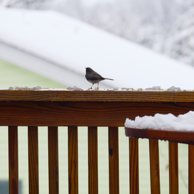 """BIRD ON A DECK"" stock image"