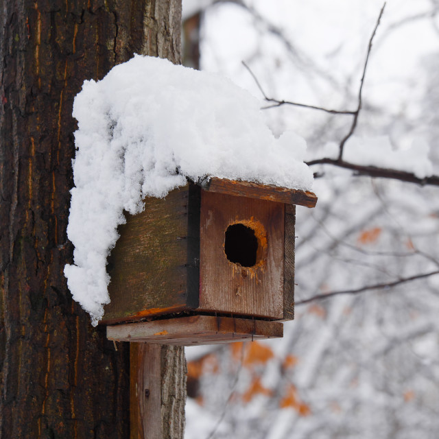 """BIRD HOUSE COVERED IN SNOW"" stock image"