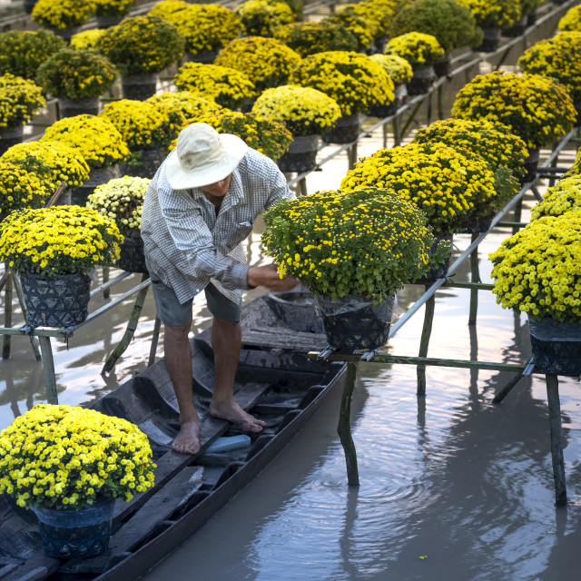 """A man on the boat is taking care of the flower garden preparing to sell to the market to serve the lunar new year in the flowers"" stock image"