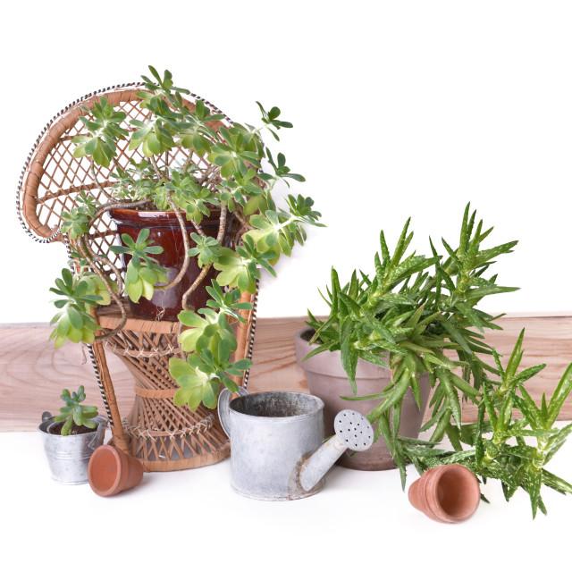 """succulant plant in garden decor"" stock image"