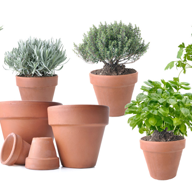 """""""potted with terracota pots"""" stock image"""