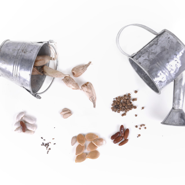"""""""seeds, beans and bulbs"""" stock image"""