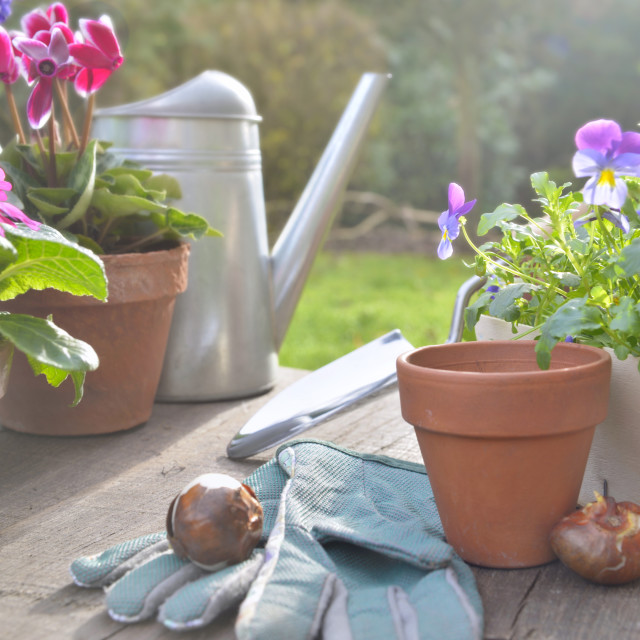 """""""spring flowers potted and gardening accessories"""" stock image"""