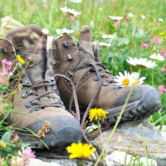 """""""hiking shoes in alpine flowers"""" stock image"""