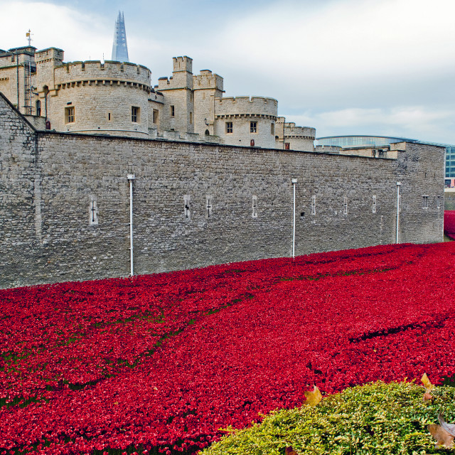 """""""Tower of London Poppy Blood Swept Lands"""" stock image"""