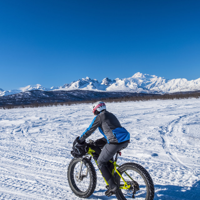 """""""A man riding a fatbike on the Chulitna Bluff Trail on a sunny winter day...."""" stock image"""