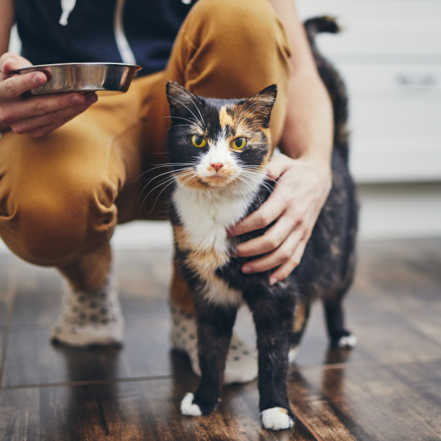 """Domestic life with cat"" stock image"