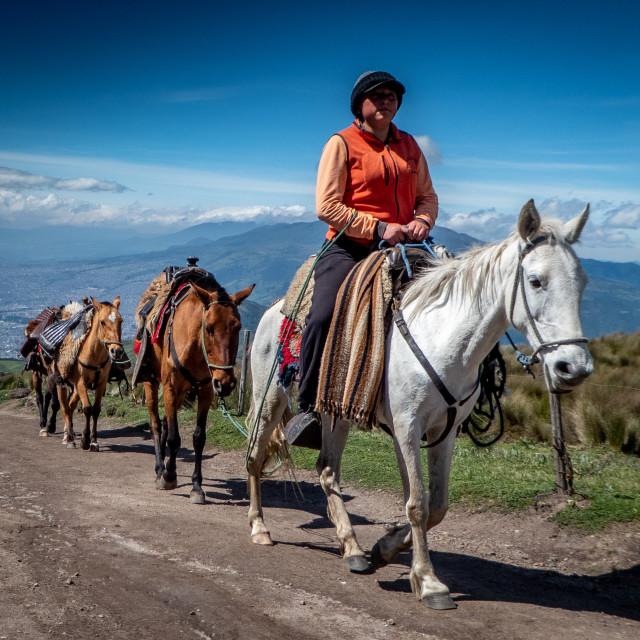 """Quito Horses"" stock image"