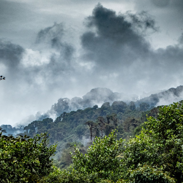 """Cloud Forest"" stock image"