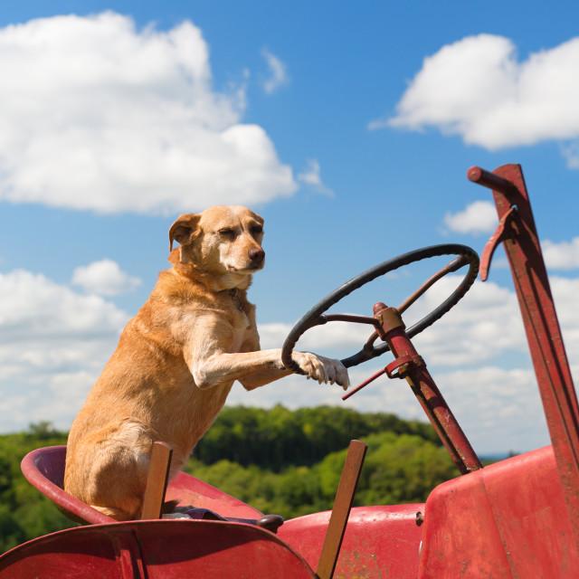 """Dog on Vintage red tractor in landscape"" stock image"