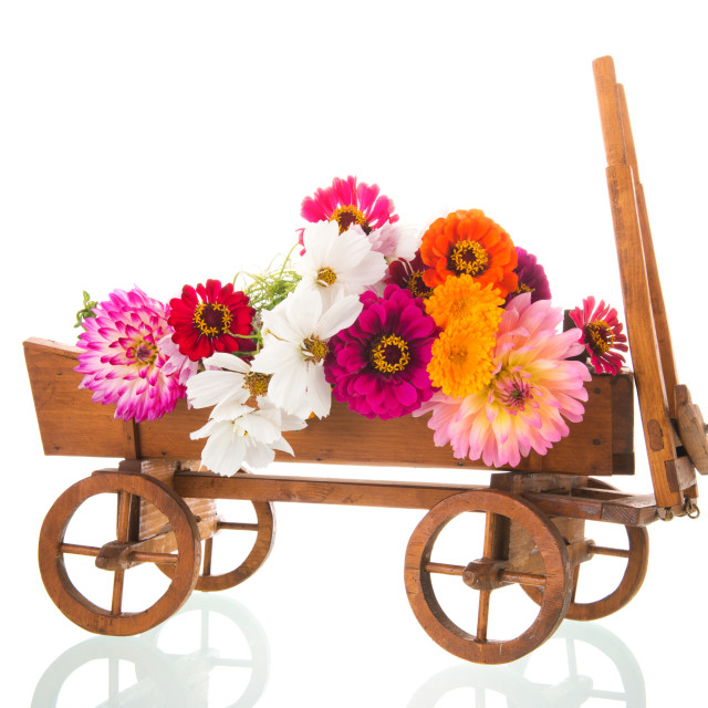 """""""Vintage cart with Zinnias from the garden"""" stock image"""