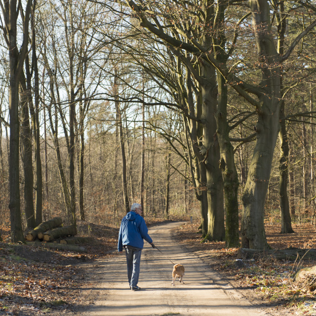 """Senior man walking dog in forest"" stock image"
