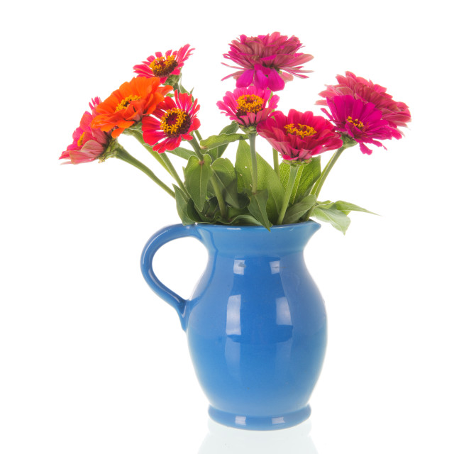 """Vase Zinnias from the garden"" stock image"