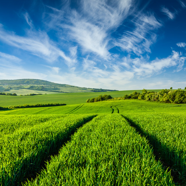 """""""Green fields of Moravia"""" stock image"""