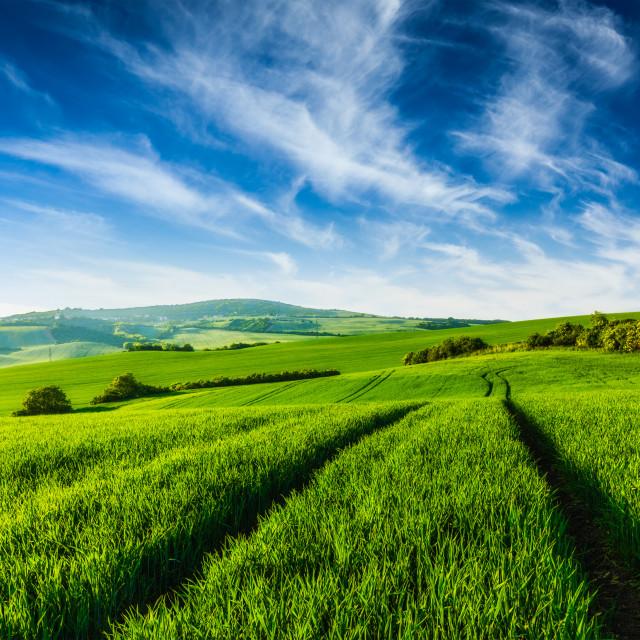 """""""Rolling summer landscape"""" stock image"""