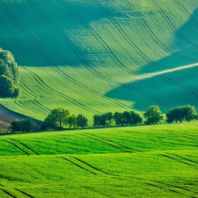 """""""Rolling summer landscape of Moravia"""" stock image"""