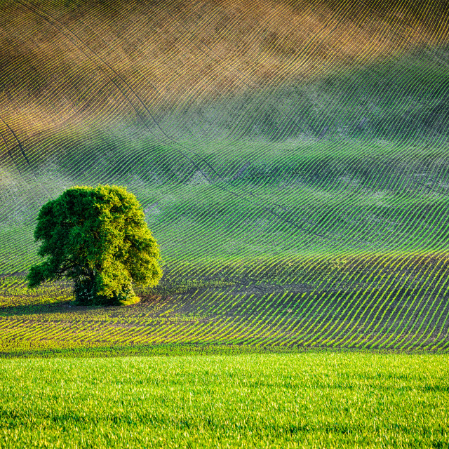 """""""Lonely tree in ploughed field"""" stock image"""