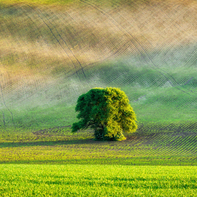 """""""Panorama of lonely tree in ploughed field"""" stock image"""