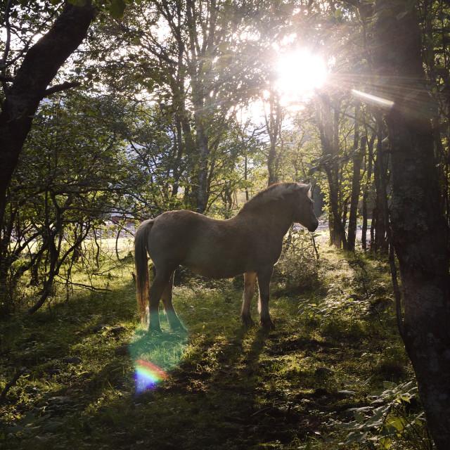 """Sunlight horse"" stock image"