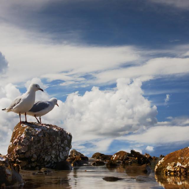 """Lagoon Gulls"" stock image"