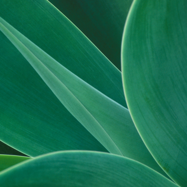 """""""African agave cactus abstract"""" stock image"""