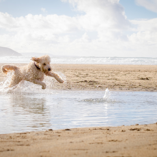 """""""Dog Jumping in water"""" stock image"""