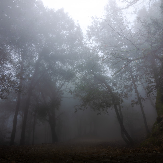 """""""The Forest"""" stock image"""